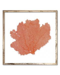 Square Classic Sea Fan Suspended between Glass Framed Art - 20 x 20 - Available in 19 Sea Fan Colors