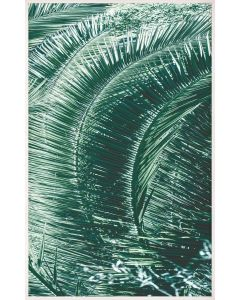 Natural Curiosities Tropicana 2 Palm Tree Wall Art with Optional Frame