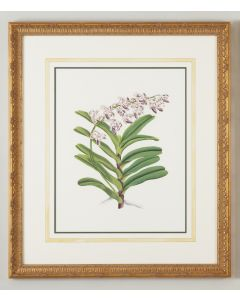 Watercolor Purple Crispum Flower Framed Wall Art - CALL FOR AVAILABILITY