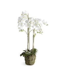 White Phalaenopsis Orchid 44'' Drop-in Arrangement