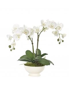 White Orchid Phalaenopsis Arranged in Bowl