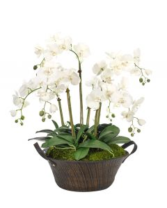 White Orchid Phalaenopsis Arranged on Basket