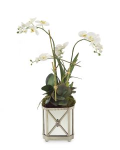 White Orchids With Foliage in Silver Mirrored Container