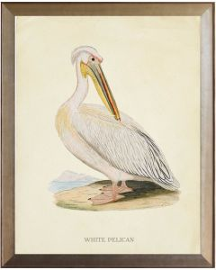 White Pelican Framed Wall Art - Available in Three Different Sizes