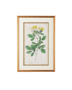 Yellow Botanical Flower Framed Wall Art - ON BACKORDER UNTIL JULY 2020