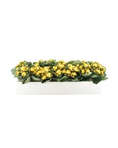 Yellow Faux Kalanchoes in Planter